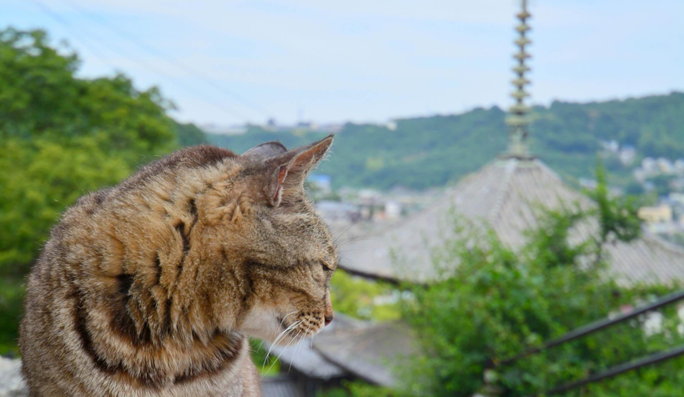 広島県尾道市の猫のいる風景