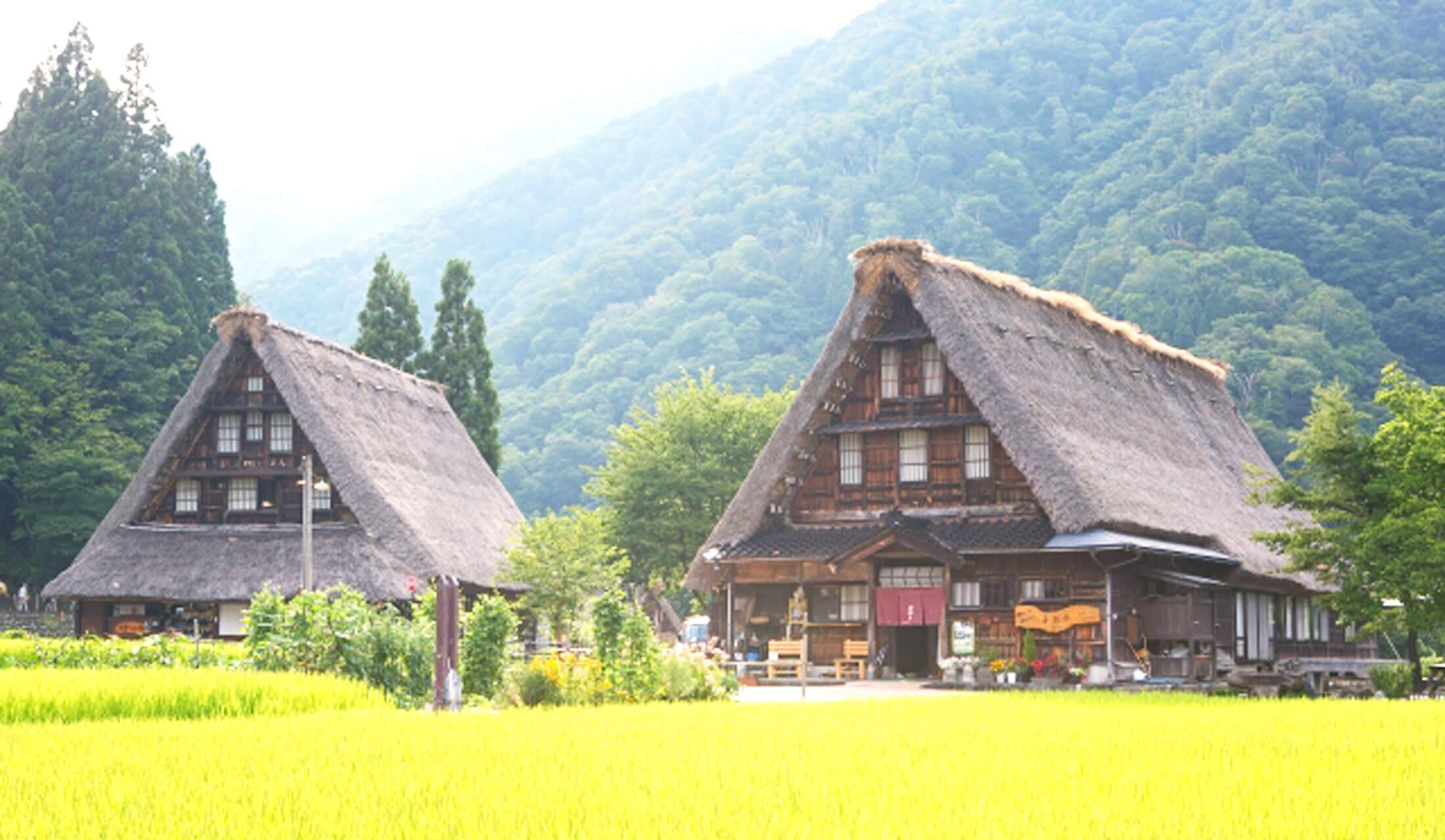 田園風景の中に建つ2軒の茅葺き屋根の合掌造りの古民家