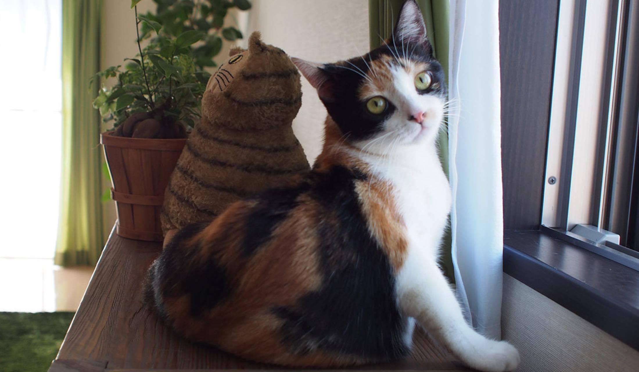 猫と暮らす永谷亜矢子さんのおしゃれインテリア部屋