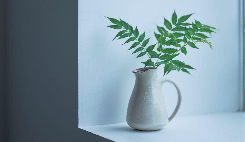 植物を活けた「ルーシー・リー」のピッチャーの写真