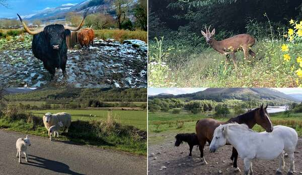 【スコットランドからのスローライフ便り】雄大な自然の中に暮らす、愛らしい動物たち