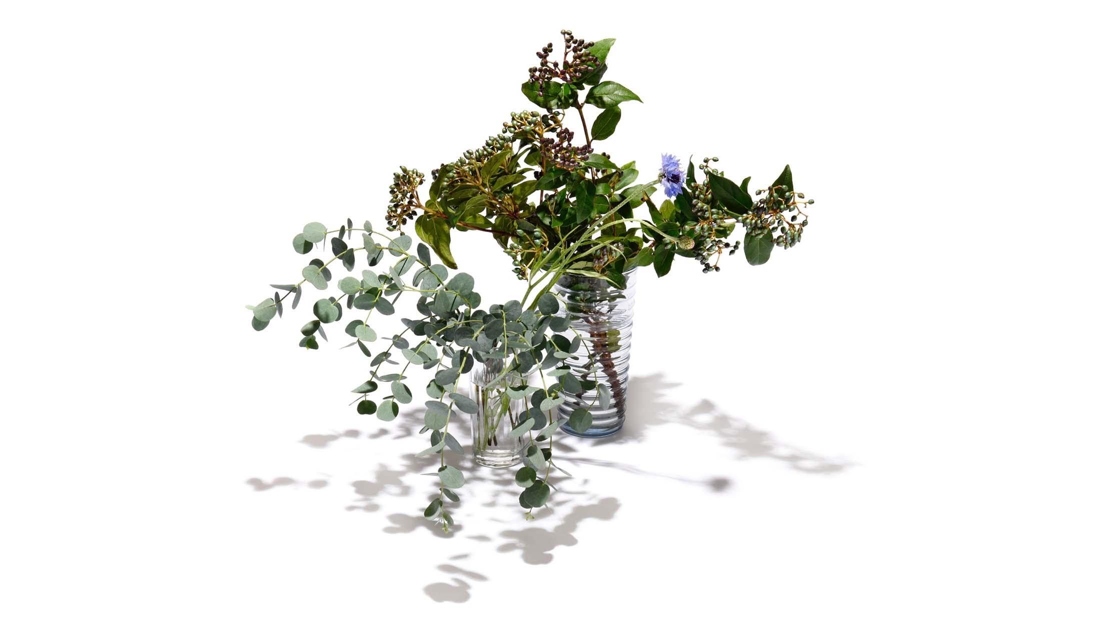 ビバーナム・ティナスとユーカリの花