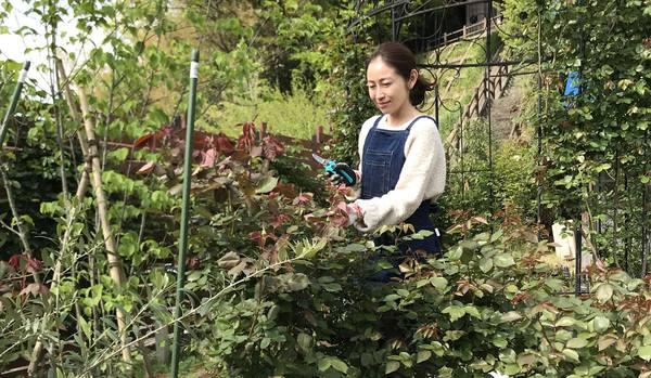 春のバラ庭園のお手入れのコツ3ステップ【消毒・剪定・挿し木】