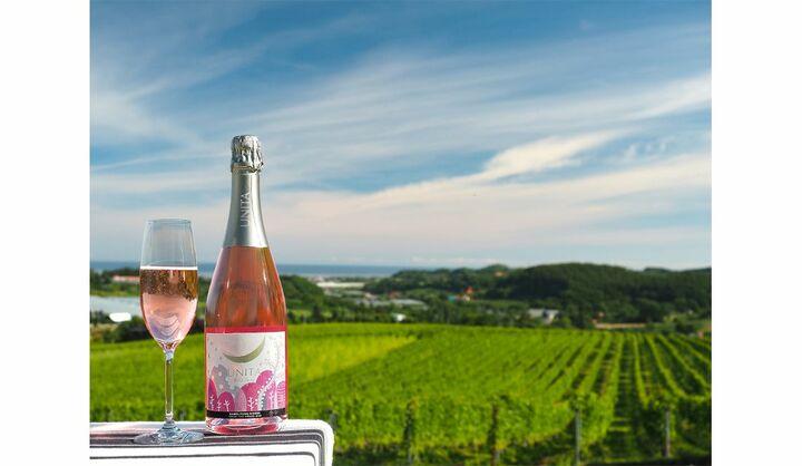 北海道 余市にあるキャメルファームファクトリーから、丁寧に手摘みで収穫、選果したブドウで造った、2019年ヴィンテージのワインが2020年9月4日(金)からリリース