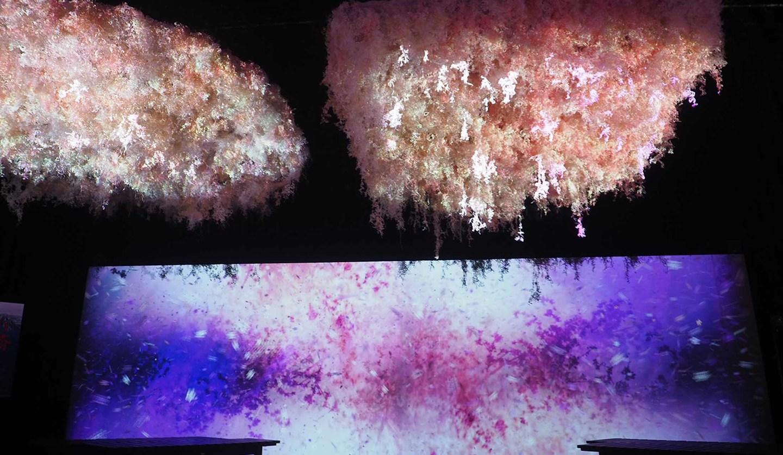 FLOWERS BY NAKEDの最新イベント内の展示「大桜彩」