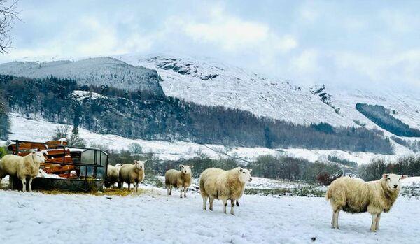 【スコットランドからのスローライフ便り】自然の恵みと、人と人のつながりを再確認した冬のお散歩