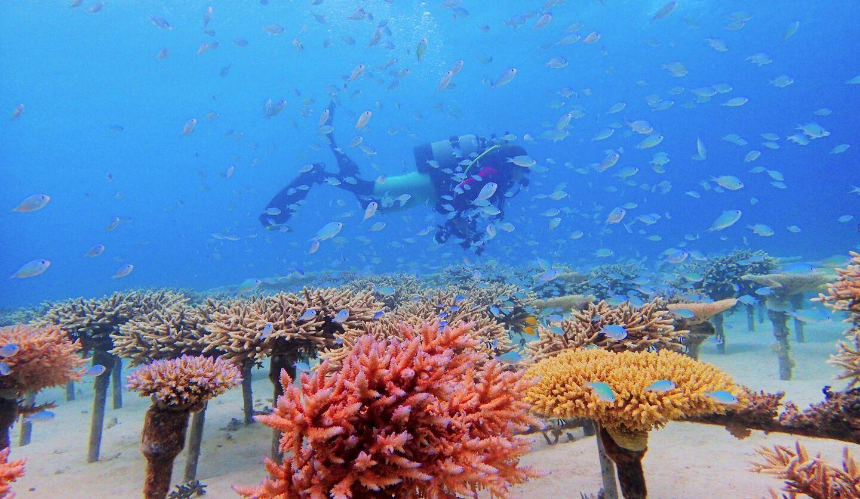 ザ・リッツ・カールトン沖縄の「サンゴの植え付け体験」イメージ