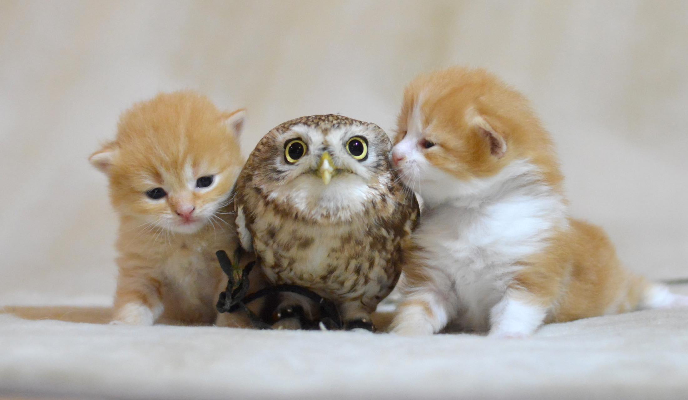 子猫に挟まれるフクロウ
