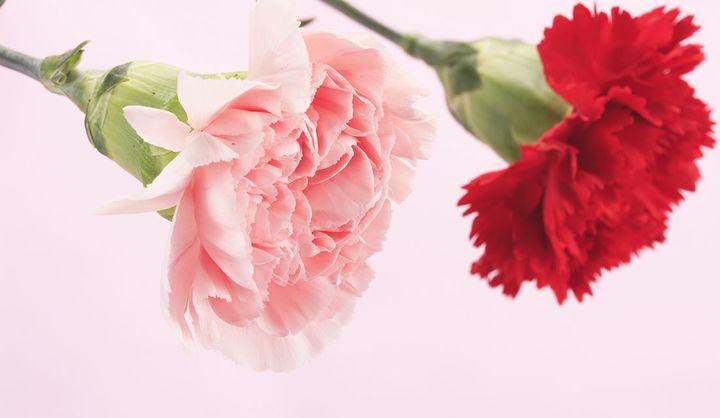 2020年の母の日はいつ?ギフトの準備はOK?母の日の意味や由来を知って、カーネーションや60~70代のおかあさんに喜ばれる花以外のおすすめプレゼントを贈ろう!