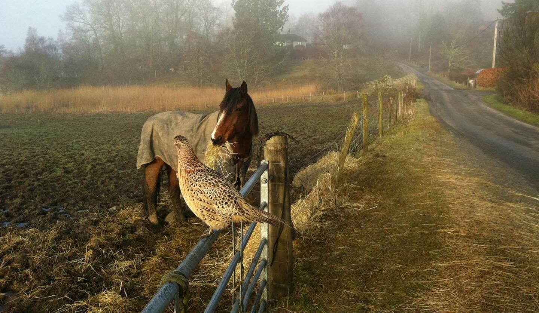 ロイさんが暮らす村で出合った馬のHALと雌雉