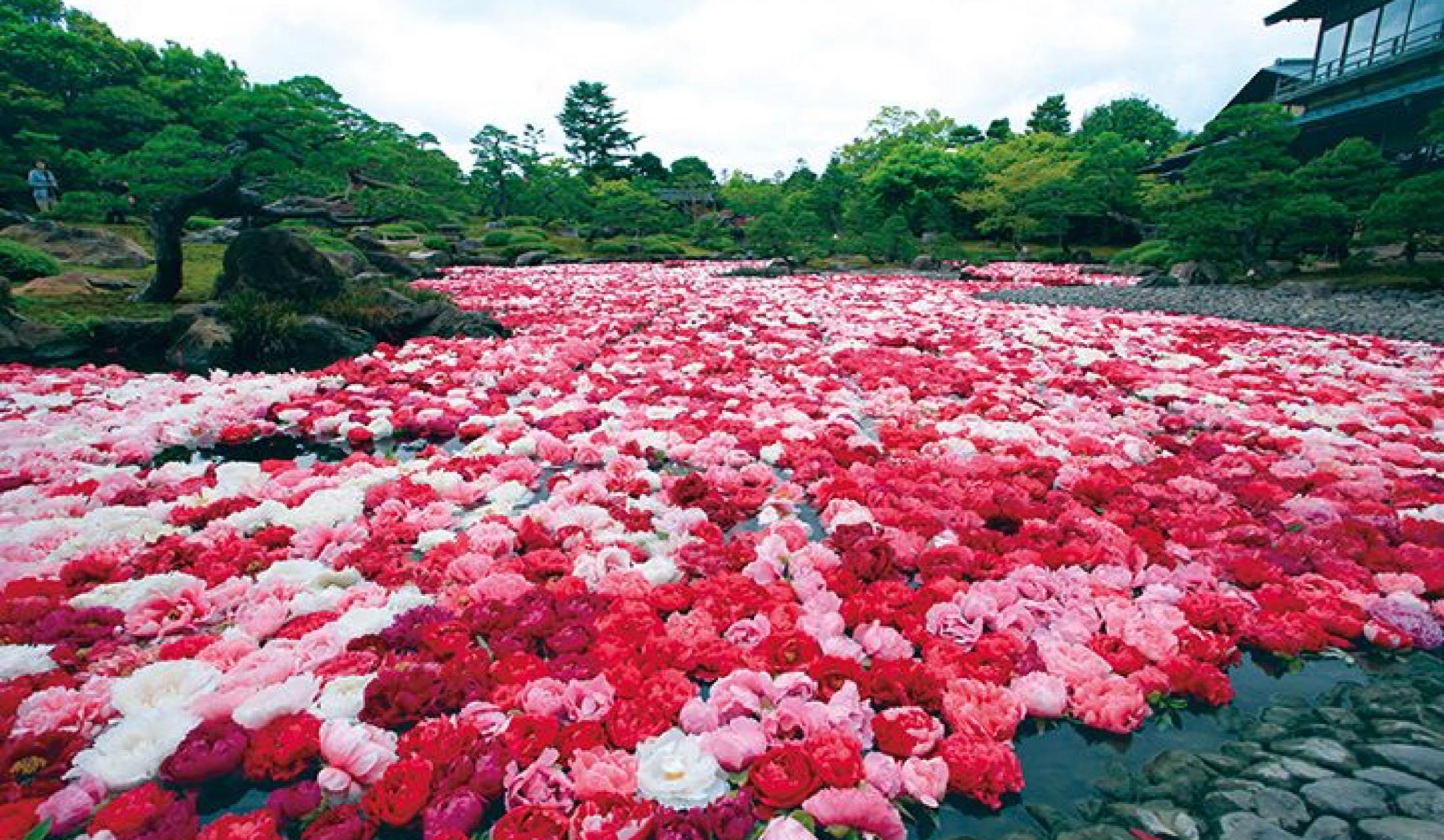 由志園の牡丹遊園会(島根県松江市)