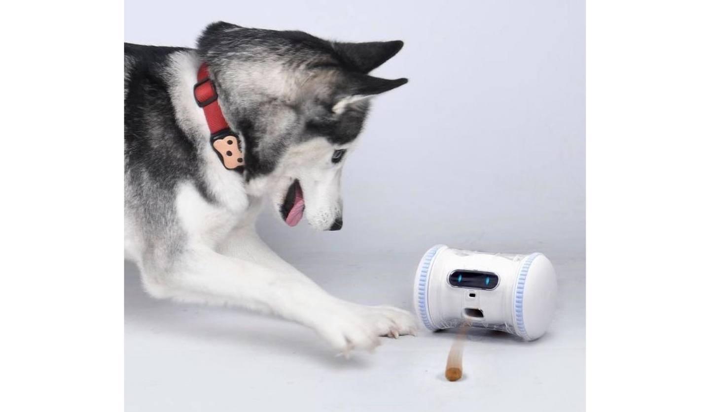 バレム・ペット・フィットネスと遊んでいる犬