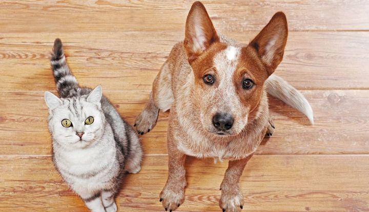 犬と猫がじっと見つめてくる写真