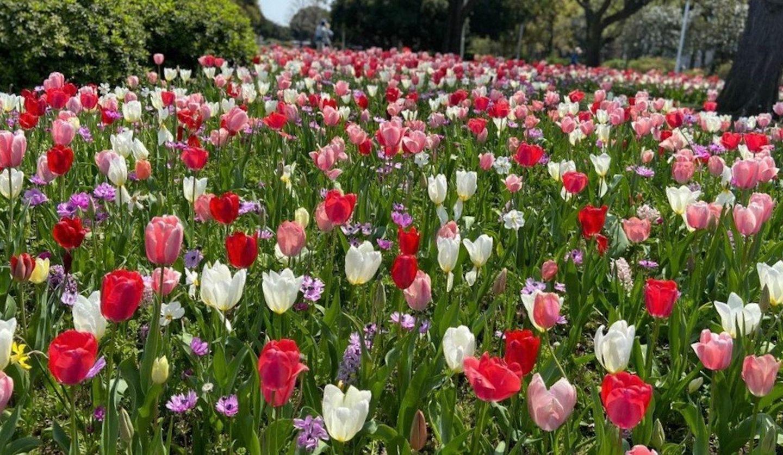 今年の日本の「花」動画