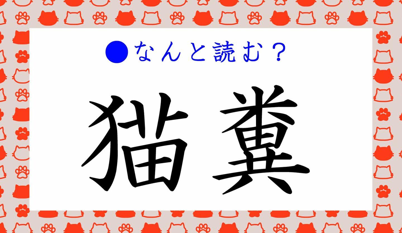 日本語クイズ 出題画像 難読漢字 「猫糞」なんと読む?