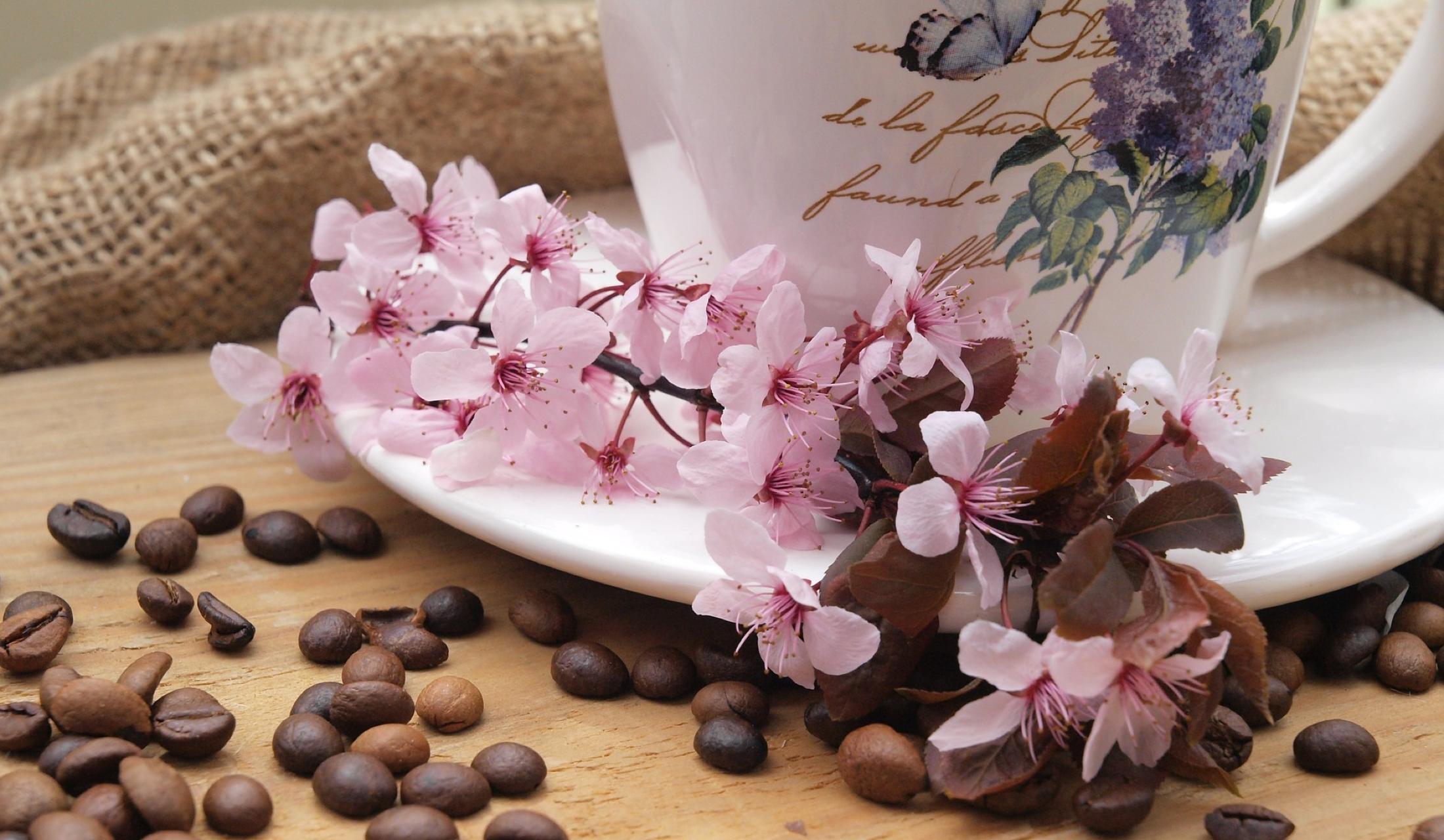 土の栄養分を吸収して育ったコーヒー