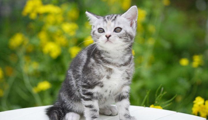 「ネコの日」はいつ?由来や「世界猫の日」との違い、関連イベントや2020年カルディ限定アイテムをチェック