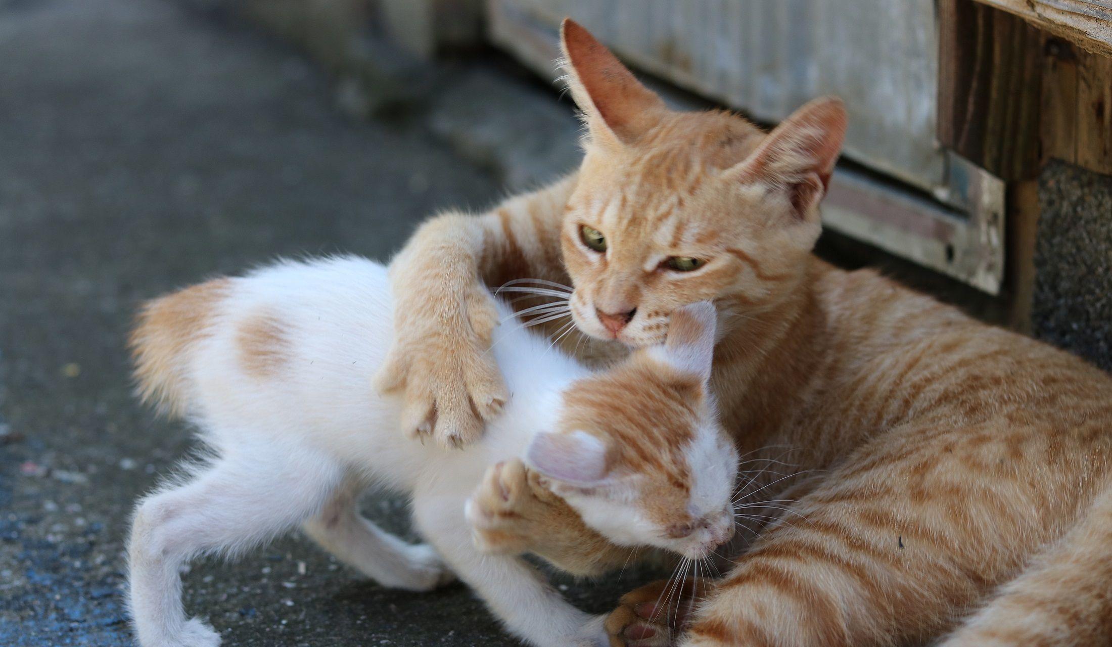 子猫をギュッとする親猫
