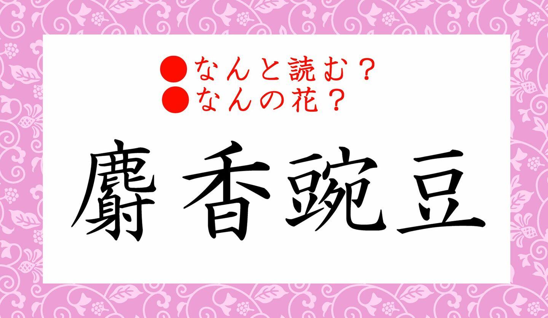 日本語クイズ 出題画像 難読漢字 「麝香豌豆」なんと読む? なんの花?