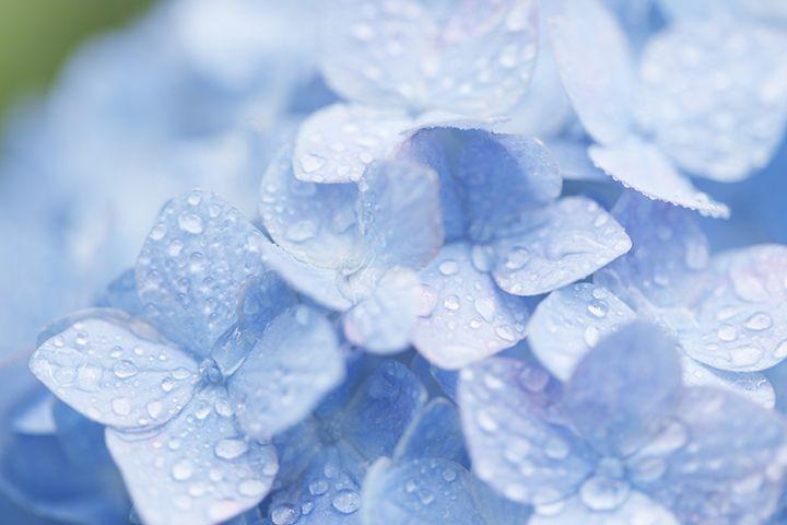 6月の時候の挨拶に使える、梅雨以外の季語と例文