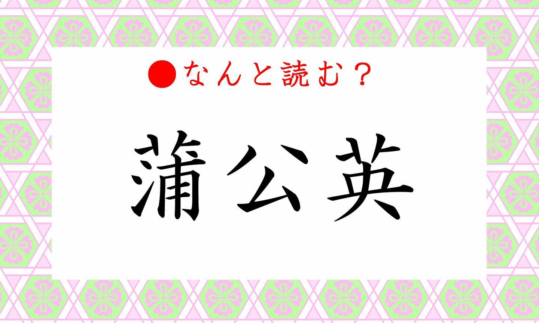 日本語クイズ 出題画像 難読漢字 「蒲公英」なんと読む?